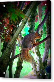 Squirrel In My Tree Acrylic Print