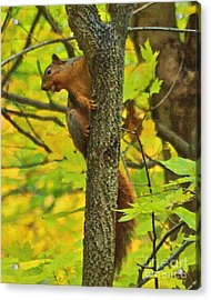 Squirrel In The Woods 2 Oil Acrylic Print