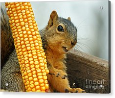 Squirrel Acrylic Print by Lori Tordsen