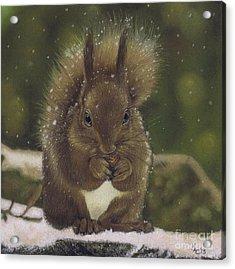 Squirrel Nutkin Acrylic Print