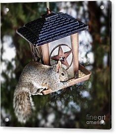 Squirrel On Bird Feeder Acrylic Print