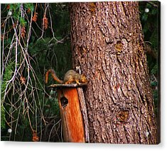 Squirrel On Top Of Birdhouse Acrylic Print