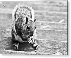 Squirrel Acrylic Print by Paulina Szajek