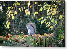 Squirrel Perched Acrylic Print by Matt Malloy