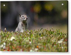 Acrylic Print featuring the photograph Spy Squirrel  by Richard Stephen
