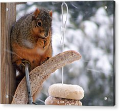 Squirrel Snack II Acrylic Print by Jim Finch