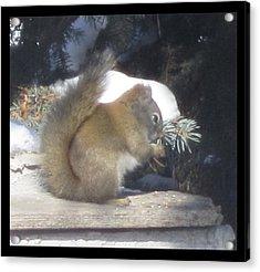 Squirrel Three Acrylic Print by Cathy Long