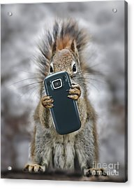 Squirrel With Cellphone Acrylic Print by Mike Agliolo