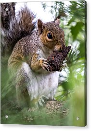 Squirrel With Pine Cone Acrylic Print