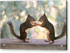 Squirrels That Share Acrylic Print