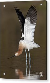 Acrylic Print featuring the photograph Sstretchhh by Bryan Keil