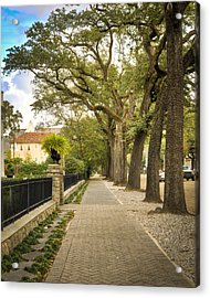 St Charles Live Oak Trees Acrylic Print by Ray Devlin