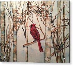 St Louis Cardinal Redbird Acrylic Print by Christy  Freeman