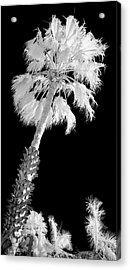St. Maarten Tropical Palm Acrylic Print