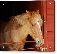 Stabled Acrylic Print