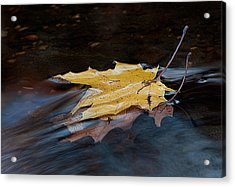 Stacked Autumn Leaves On Water Acrylic Print