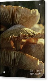 Acrylic Print featuring the photograph Stacked Fungas by Lori Mellen-Pagliaro
