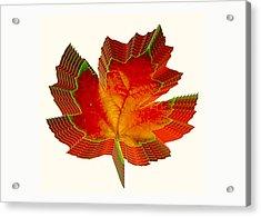 Stacked Maple Leaf  Acrylic Print by Susan Elizabeth Dalton