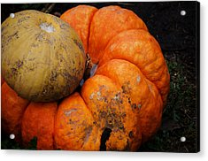 Stacked Pumpkins Acrylic Print