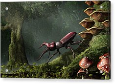 Stag Beetle Acrylic Print by Daniel Eskridge