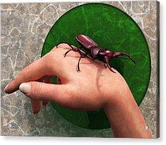 Stag Beetle On Hand Acrylic Print by Daniel Eskridge