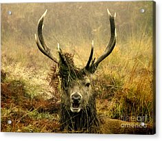 Stag Party The Series. One More For The Road Acrylic Print