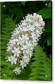Acrylic Print featuring the photograph Stagger Grass Lily by William Tanneberger
