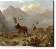 Stags And Hinds In A Highland Landscape Acrylic Print