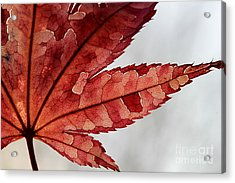 Acrylic Print featuring the photograph Stained Glass by Kenny Glotfelty