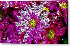 Stained Glass Pink Chrysanthemum Flower Acrylic Print by Lanjee Chee