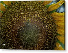 Stained Glass Sunflower Acrylic Print