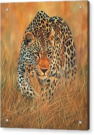 Stalking Leopard Acrylic Print