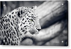 Acrylic Print featuring the photograph Stalking Prey by Stwayne Keubrick