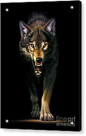 Stalking Wolf Acrylic Print by MGL Studio - Chris Hiett