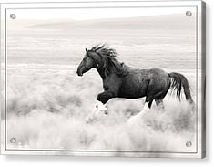 Stallion Blur Acrylic Print