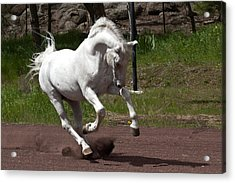 Acrylic Print featuring the photograph Stallion D4052 by Wes and Dotty Weber