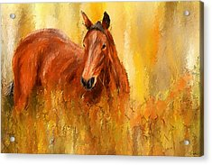 Stallion In Autumn - Bay Horse Paintings Acrylic Print