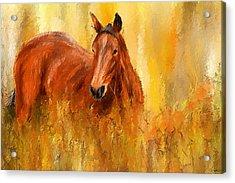 Stallion In Autumn - Bay Horse Paintings Acrylic Print by Lourry Legarde