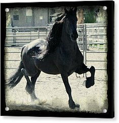 Stallion In Motion Acrylic Print