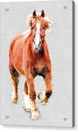 Stallion Portrait Acrylic Print by Dan Friend