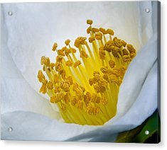 Stamen Forest Acrylic Print