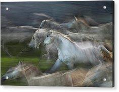 Stampedo Acrylic Print
