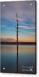 Stand Alone 16x9 Crop Acrylic Print by Michael Ver Sprill