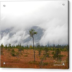 Stand Alone Acrylic Print by Laura  Wong-Rose