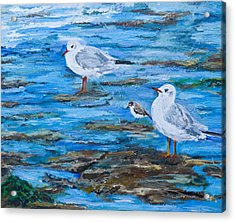 Sea Birds Wait Acrylic Print