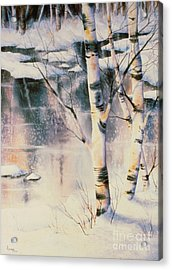 Stand Of Birch Acrylic Print