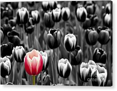 Stand Out From The Crowd... Acrylic Print