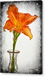 Stand Out Lily Acrylic Print by Sandi OReilly