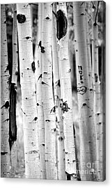 Acrylic Print featuring the photograph Stand Tall Aspens by Ruth Jolly