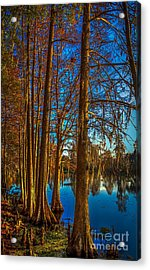 Stand Tall Acrylic Print by Marvin Spates